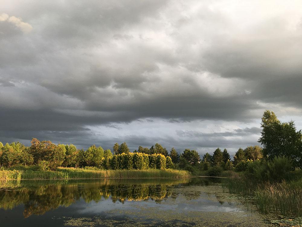 A reflective pond