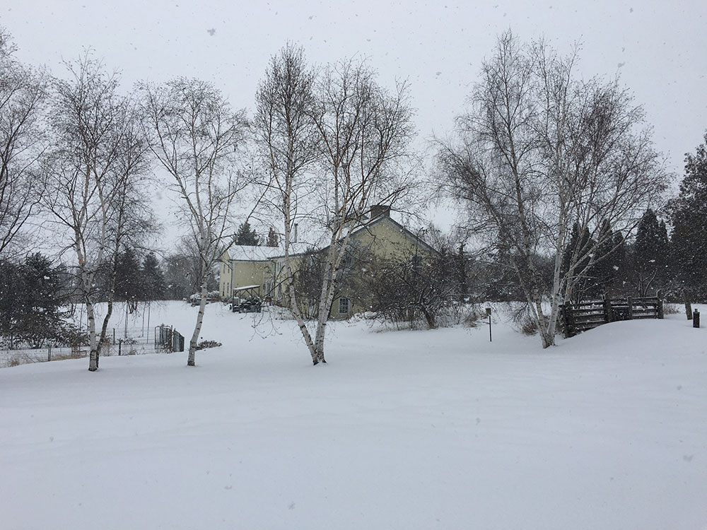 A house and field covered in snow